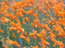 Picture of orange flowers in bloom